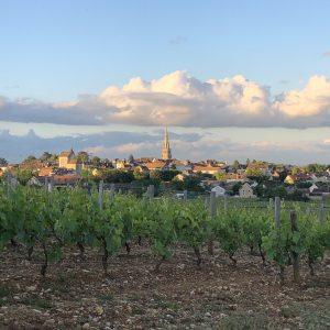 Meursault entre ciel et vigne